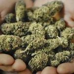 Metro #Vancouvers Tantalus Labs is set to revolutionize cannabis growth http://t.co/X3HHOkX05e http://t.co/lrt8zqnjm9
