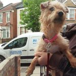 Trixie is a 1-2 yr old Terrier cross, she is a sweet girl, adopt at @AllDogsMatter #London - http://t.co/kCzvBQX1uy http://t.co/cK4NQqucY9