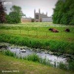 Cambridge, 29 May 2015. http://t.co/EaPN71aOK5 #Kings500 http://t.co/bst6bO3rEG