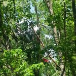 Picture of helicopter caught in trees after crash. @darrenfox17 on scene. homeowner talking to @FOX17 now. http://t.co/tgq1SxdWUH