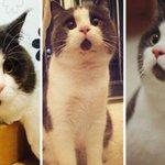 @larrymadowo @thetrendlive #TheTrend The cats React to @AnitaNderu s Marriage Demand ???? http://t.co/Wqx4zKj6Ux