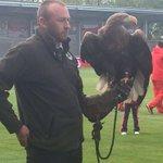 Como homenagem ao Glorioso, também há uma águia em Manchester. #CarregaBenfica http://t.co/3R9PmwvxEf