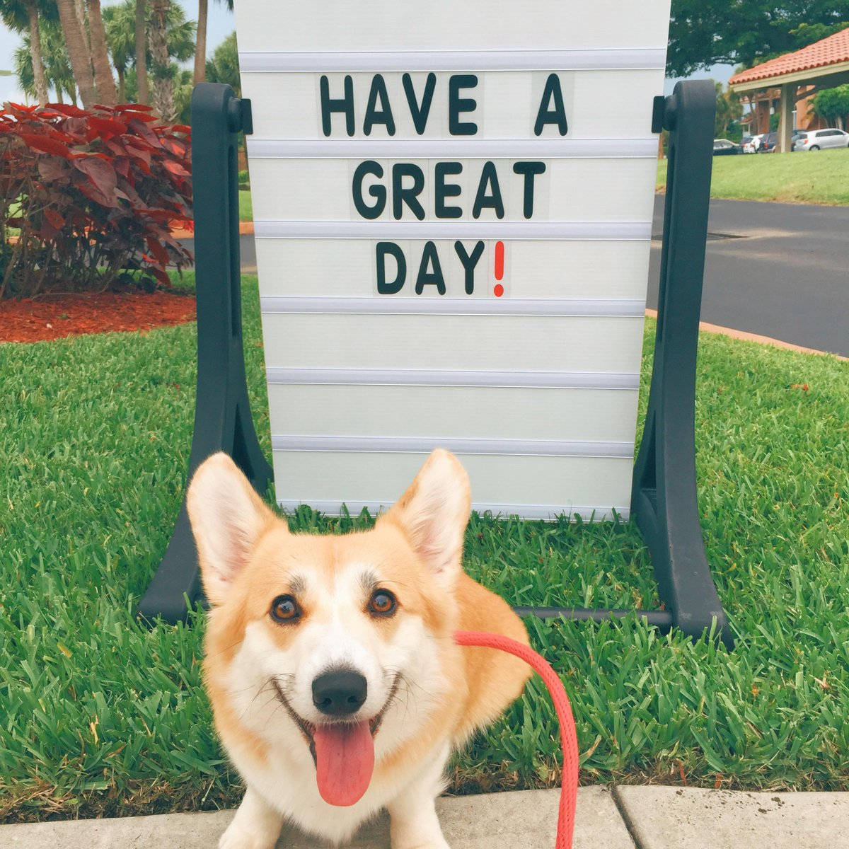 My #corgi #dog has a message for you guys! http://t.co/8LZLbfQTNQ