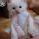 子猫探してます、名前はゴン。 今日の朝方(9時頃)神隠しのようにいなくなりました。生後1ヶ月未満です。 兵庫県あたりいなくなりました。見かけたら教えてください、お願いします(つ_;) http://t.co/9GoGYh7z1F