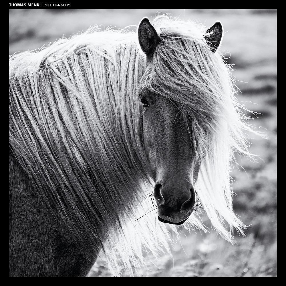 ... sweet blondie :) | Iceland | Thomas Menk http://t.co/M8iVGiR0cQ