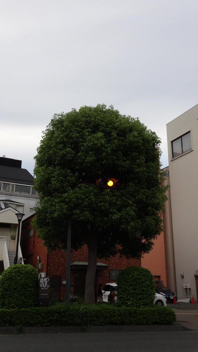日立のとある信号。ほとんど妖怪である。 http://t.co/Nni3IUW2N5