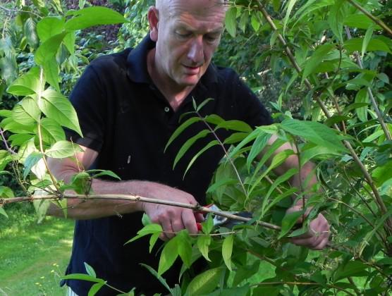 Ten jobs to do in the garden in early summer https://t.co/ZkWz6cGVHl via @MyGardenSchool online #gardening classes http://t.co/DcgQReZGuL