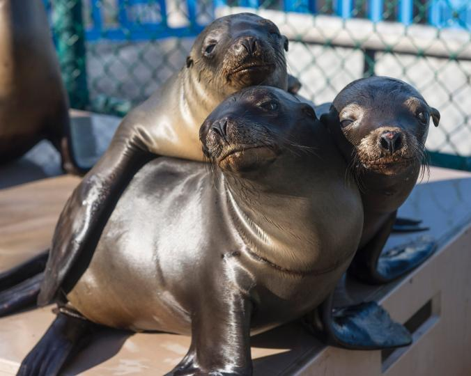 Check out this @NatGeo vid and post on the #sealion crisis in CA http://t.co/qPWKreCbk7 @TMMC http://t.co/i31wh1H3V6