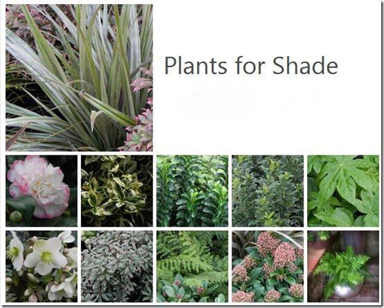 .@MyGardenSchool Blog | Planting in Shade: http://t.co/pmapbAqGLg Online #gardening classes http://t.co/SMstnVNhos