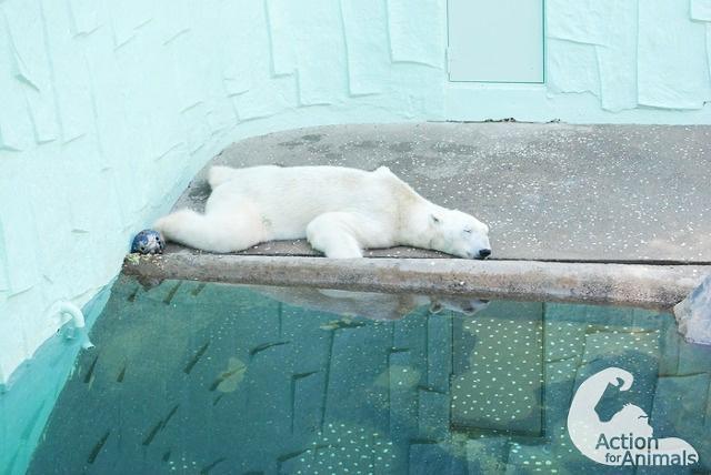 최소한의 냉방장치도 없이 열악한 곳에 갇혀 정형행동을 하고 있는 에버랜드 북극곰 통키의 전시환경을 개선하고 향후 북극곰이 더 이상 한국에 들어오지 못하도록 서명해주세요! http://t.co/HCtskb9sdC http://t.co/pSz2TFE29e