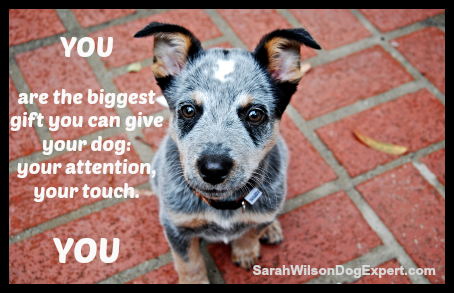 YOU are the biggest gift you can give your dog: your attention, your touch. YOU! #dogs #puppies #doglovers http://t.co/zJRGkHvFIp