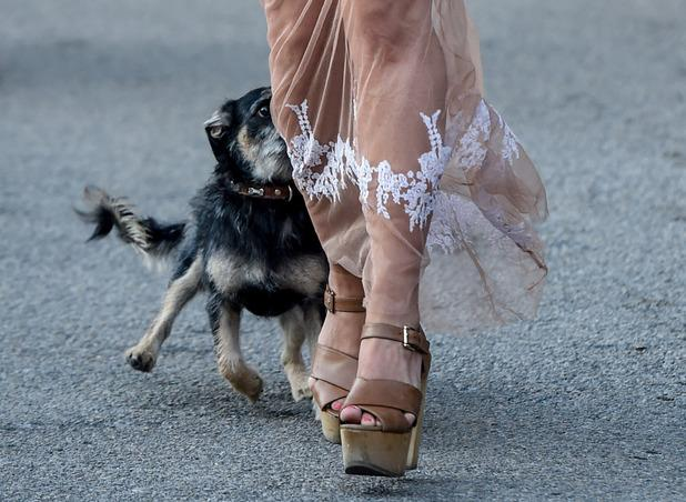Guess who? TOWIE star gets chased by dog in Marbella