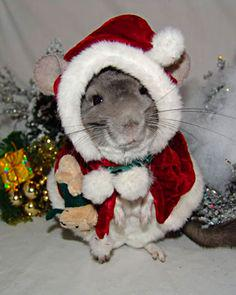 Randomly drawing in 4 minutes. Chinchilla-Claus wants to to give u some passes @twentyonepilots @therave #FM1021LOVE http://t.co/evYGfqOoYL