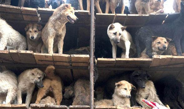 GRAPHIC CONTENT: Horror scenes as police raid illegal dog meat slaughterhouse http://t.co/6GZ3ZdMLAz http://t.co/wwBAb0GNYK