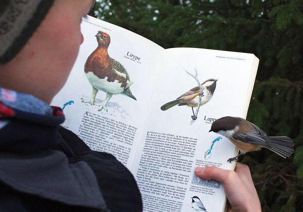 This bird landed on the page about itself: http://t.co/5aNSY1xzmp