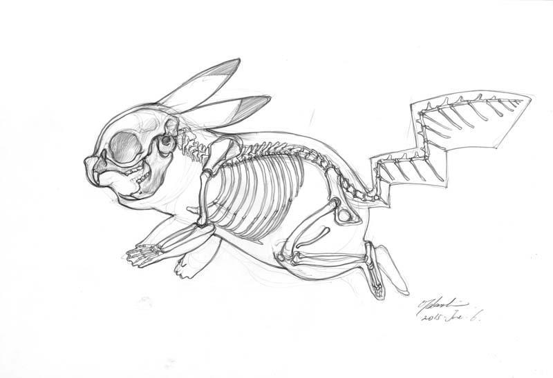 ピカチュウ骨格図、側面からのラフ。尾椎を減らし血道弓をつけることで幅広の構造を支えている。毛が長いだけならここまですることはないと思う。ネズミという設定で前肢の指が5本あるのは不自然。脳が非常に大きく知能は高そう。 http://t.co/MtOqcq5llt