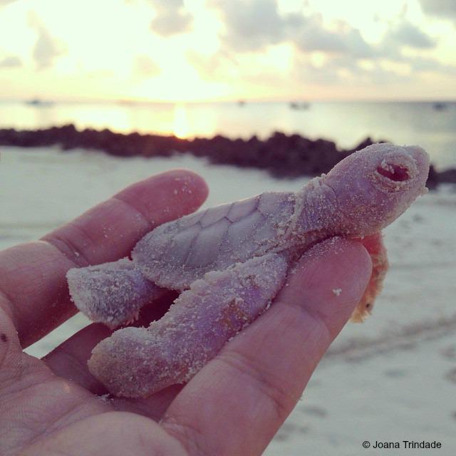 Rare albino #turtles hatch on Vamizi Island, Mozambique - http://t.co/AJGkqn9Zt3 http://t.co/kBd2X6WCVN