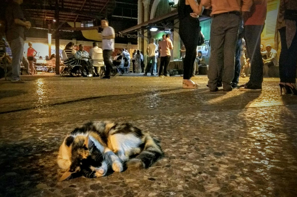 I've finally found my spirit animal: Cat passed out in the middle of a Puerto Rican block party. http://t.co/itq3EhDPkr