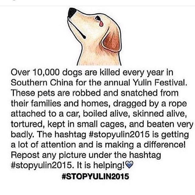 Please never stop retweeting this! #ShameOnHumanity #StopYuLin2015 http://t.co/rvYPjODRlT
