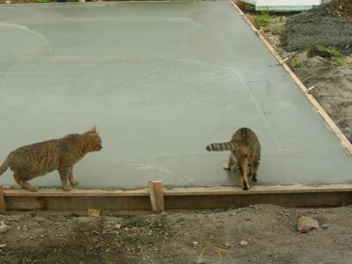その一歩は、ネコにとっては小さな一歩だが、基礎工事の職人さん達にとっては大きな一歩だ…と思う…。 http://t.co/jl52ilSxK7