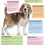 ⚠PLEASE READ THIS POSTER ABOUT THE LIFE OF A RESEARCH BEAGLE⚠  PLS 📝 & RT https://t.co/y0eSPGaPZU #FreeLabBeagles http://t.co/XF2ZQeuHNe