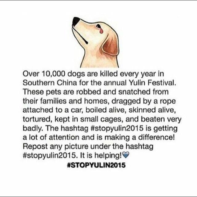This is beyond disgusting #StopYulin http://t.co/jfCXMXDFeL
