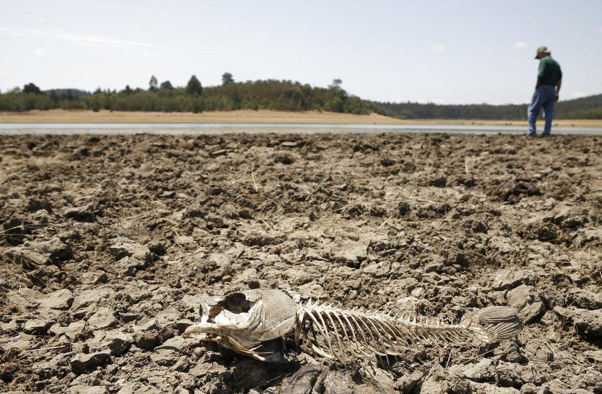 Учёные: На Земле начинается шестое массовое вымирание