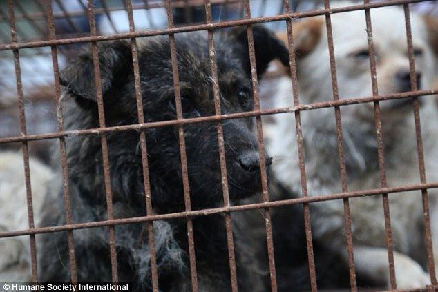We're in Yulin with our Chinese partner groups to #StopYulin2015 - your support gives us strength! http://t.co/KYvHiILzEW