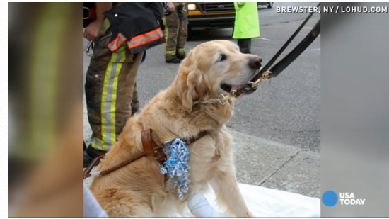 Service dog jumps between blind owner, bus http://t.co/mNzmPhQCTE What a dog! What a friend! #GoodDog #HeroDog http://t.co/IvgrfXl3FS
