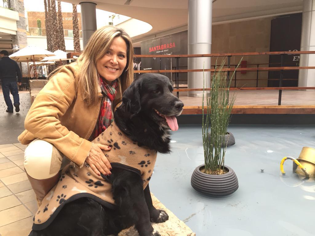 @botaspuesta este es el perro que anda solo x Parque Arauco sin id http://t.co/0CMSNjSNlY