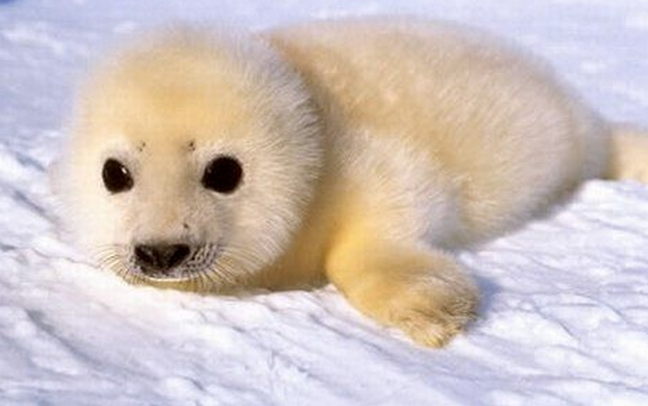 If anyone's having a bad day; here's some cute baby animals http://t.co/XZD2NESCdK