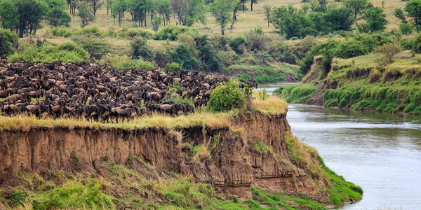 12 photos of the wildebeest migration across the Mara River http://t.co/6yumpBzQKm http://t.co/PVcmc24oAC