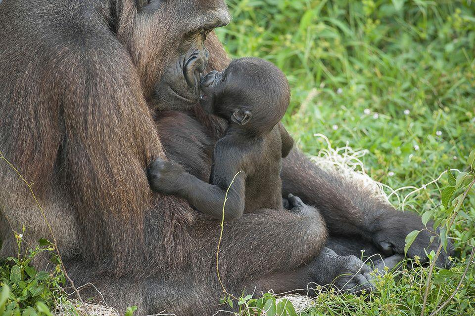 There's something in the water! #BabyBoom #primates #babies http://t.co/16kkqsE95z