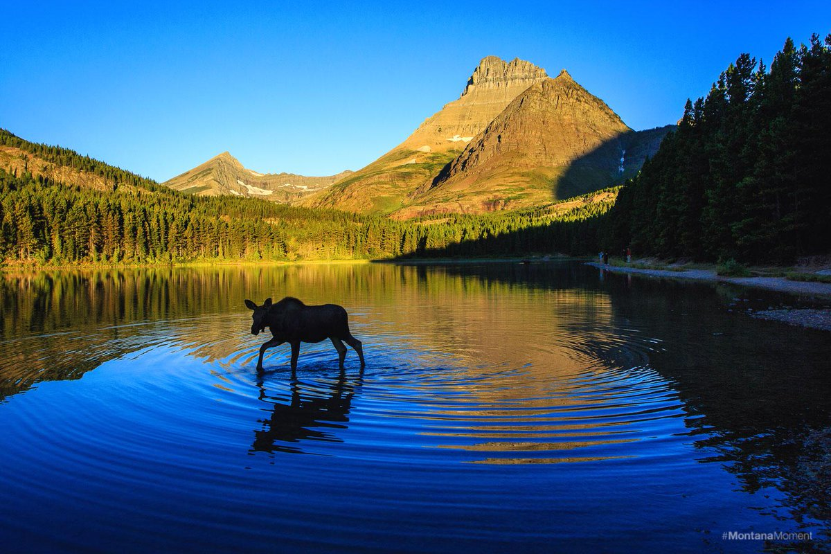 Stumble across a #MontanaMoment like this in Glacier National Park. http://t.co/iETxqAQMpr