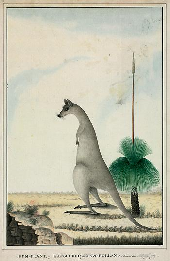 #Strangecreatures I rather like the First Fleet painting of the kangaroo from the @NHM_London's Images of Nature http://t.co/lkodRhKNYF
