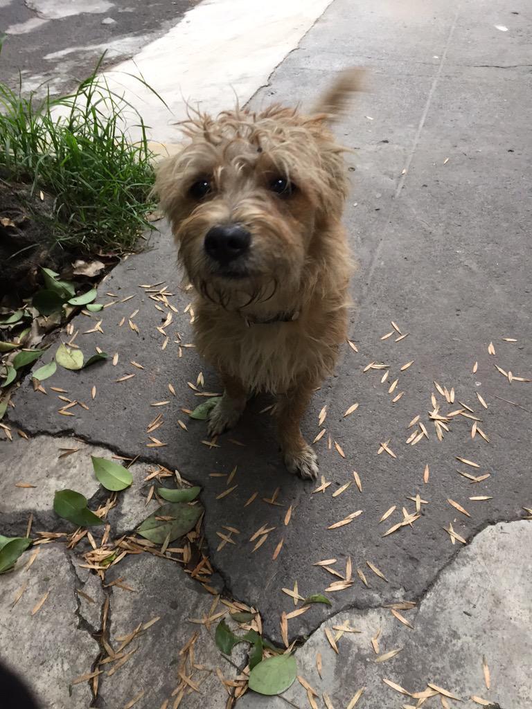 @AnimaliaAdopta perrito con collar deambulando por Minerva en la Florida. Le urge un dueño cariñoso. http://t.co/DFAVA9nEAT
