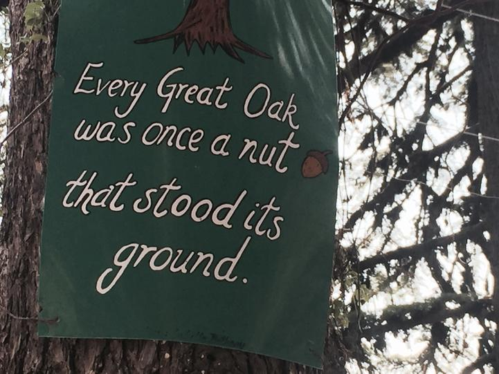 #SundayPic: spotted on an oak tree in Landour, U-Khand. May even make it to @narendramodi summer holiday album http://t.co/926xPhIh1u