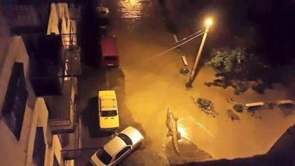 thanks to the flood, animals in Tblisi have the time of their lives, as long as it lasts. http://t.co/9M9SmR5BLx /v @Tiramarit + @zezunja