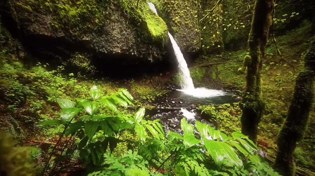 Instant nature therapy: http://t.co/bd0EAnBmgB http://t.co/pIaHLle3Sz