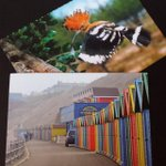 Image of postcrossing from Twitter