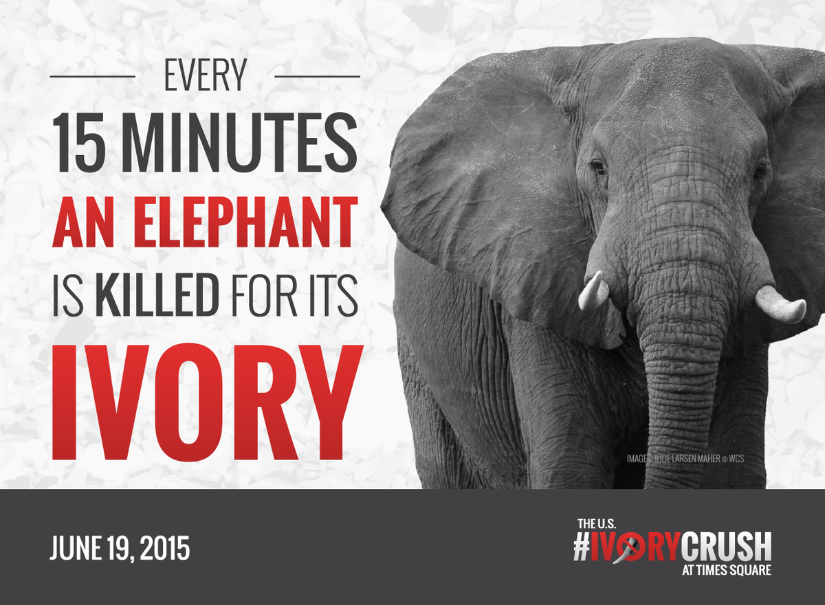 1 elephant dies every 15 mins & US is a major market. Let's crush the ivory trade. http://t.co/hql6CztK9m #IvoryCrush http://t.co/5o15Ji4pmp