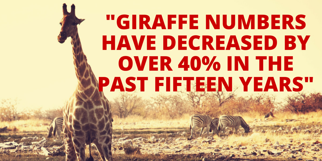 "Please RT & spread awareness: ""World Giraffe Day Is June 21"" http://t.co/MpB5DvPHY1 @Save_Giraffe http://t.co/I9UJ08CEiM via @planetexperts"