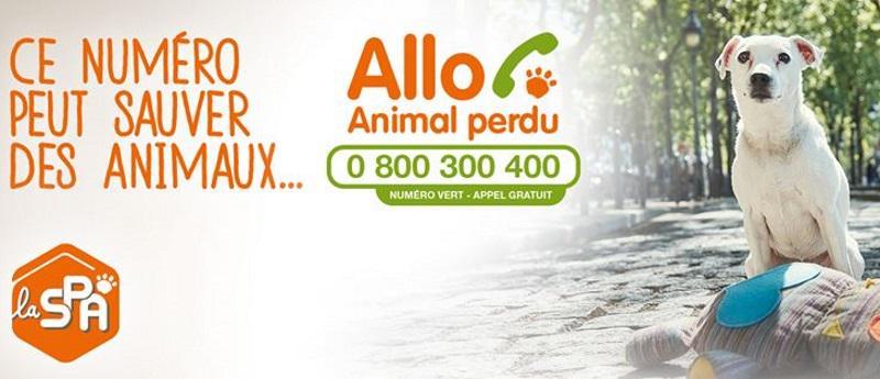 Allo animal perdu : un numéro de téléphone pour sauver des animaux http://t.co/EyIG3FVKZy @SPA_Officiel @Icad_fr http://t.co/wEBvRbCn2g
