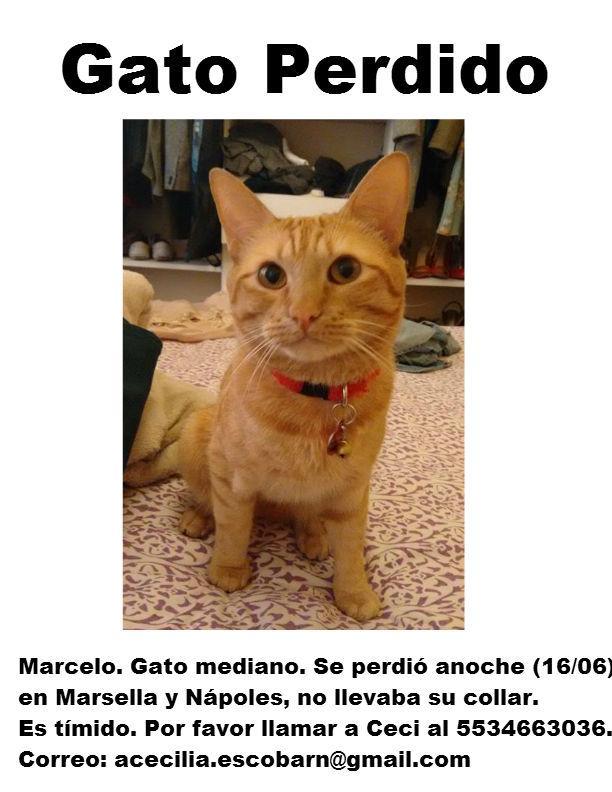 Gracias a todos los que dieron RT para encontrar a mi Marcelo. Ojalá su apoyo sirva para que vuelva. Abrazo triste. http://t.co/GmTDmXpTua