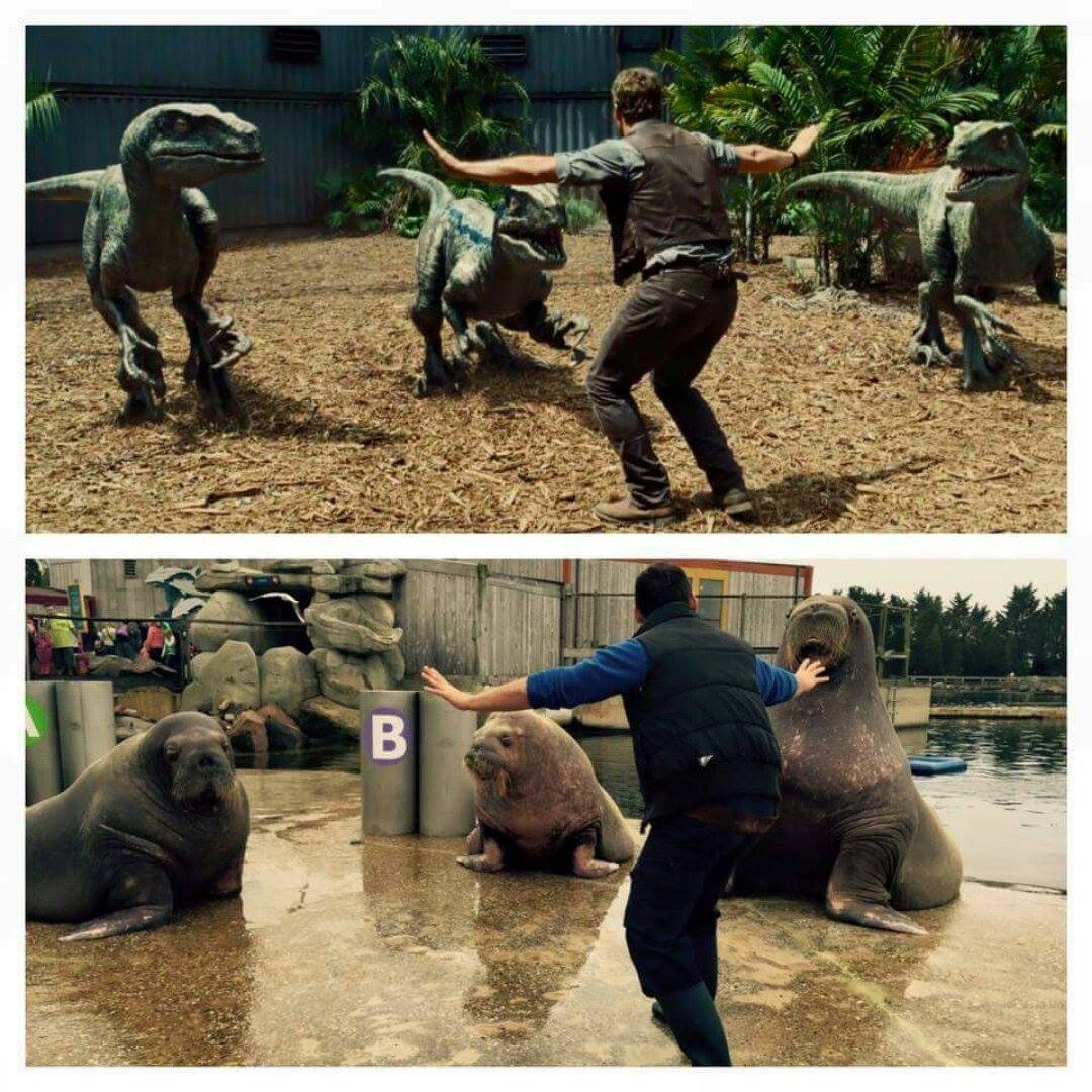 Recreating Jurassic World's Velociraptor taming with real animals is my new favourite thing.