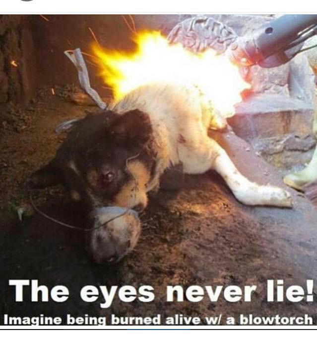 Dogs deserve better than this. They are Man's Best Friend for more than 15k years.Spread this. Stop This. #StopYulin http://t.co/yCQ2qDNAHI