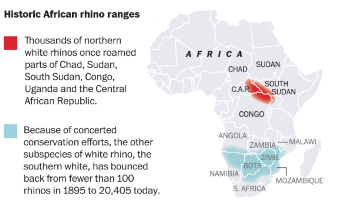 RT @GrayInGlasgow: More #DataJournalism: Northern white rhino heads for extinction. Conservation work saved species in Southern Africa. http://t.co/lxGkA0zxOP