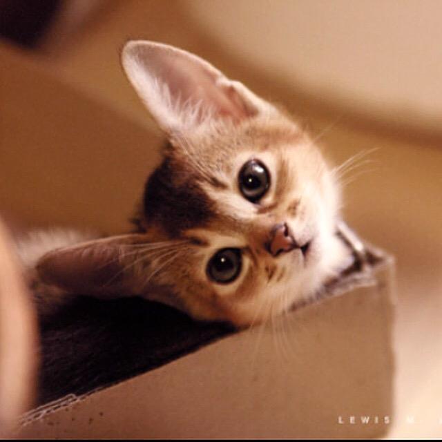 술김에 붓다사진 대방출 1 #abyssinian #catinstagram #cat http://t.co/XriEC0CQEM