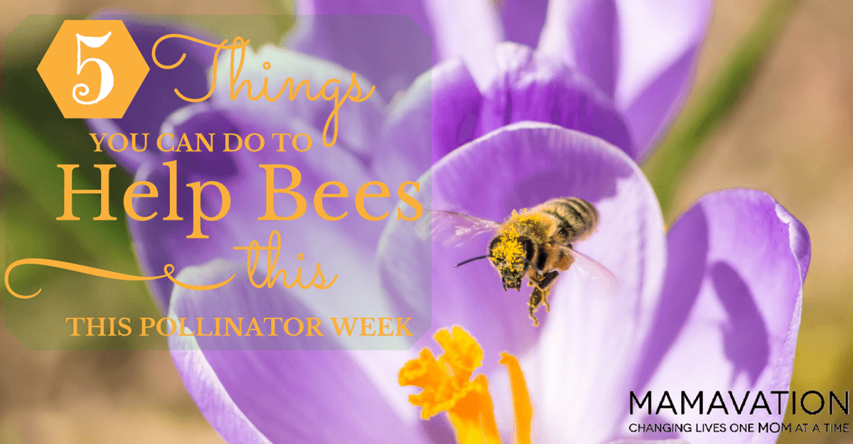 5 Things You Can Do to Help Bees this #PollinatorWeek http://t.co/Xbm89gc25x @BettyBeekeeper @SonnyBeez @iamgreenbean http://t.co/2XZhdC8jNz