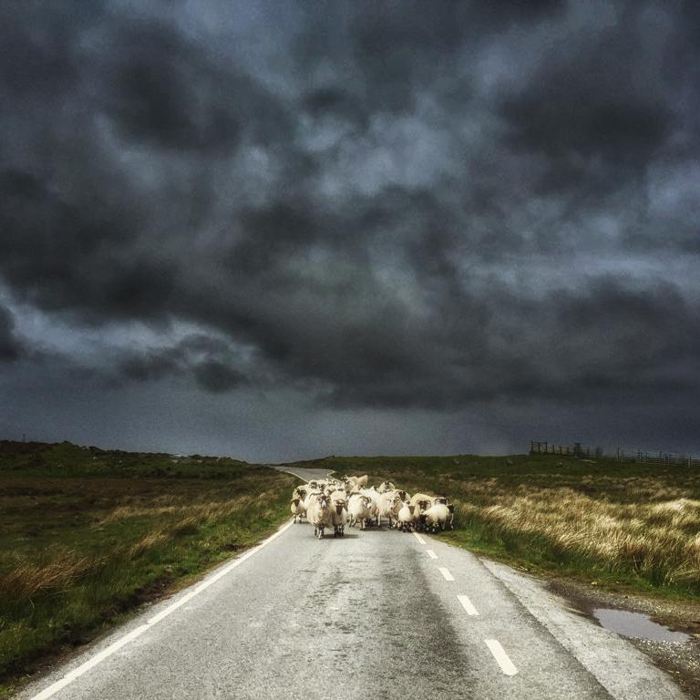 今日から、スカイ島のさらに外側にあるLewis島に来てるど。地の果て感ありまくりやで  そして道路に羊がおる。 http://t.co/yDpglbx7je